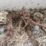 mega mudanza hormigas